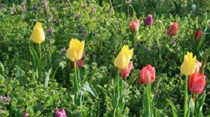 春の花園(3)
