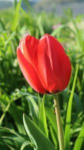 春の花園(5)