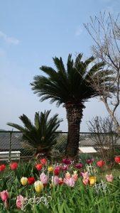 春の花園(14)