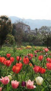 春の花園(15)