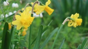 春の花園(6)