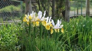 春の花園(16)