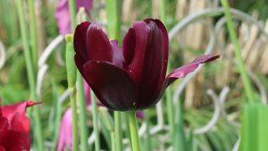 春の花園(17)