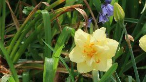 春の花園(22)